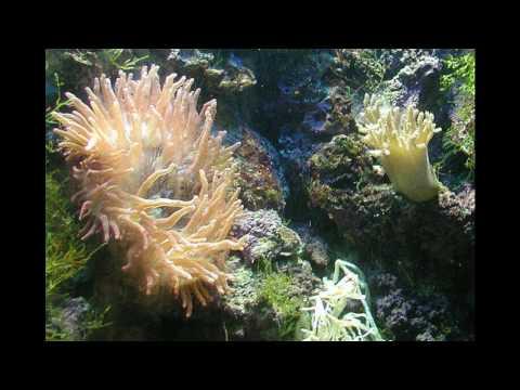 Paraziták és parazita adaptáció platyhelmintákban