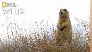 Prairie Dog Fight | Prairie Dog Manor