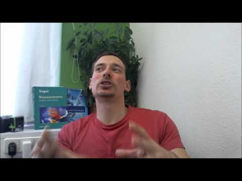 Die billigsten Tabletten für die Prophylaxe der Würmer