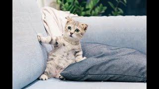 Ethio funny video compilation#9.Funniest & cutest animals world, ethio mito.