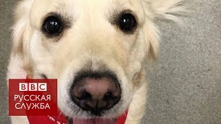 Собаки-доноры спасают жизни