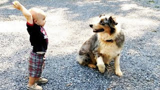 Family Dog Runs Towards Baby – Stuns Parents With What He Does Next