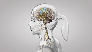 Au coeur des organes : Le fonctionnement du système nerveux