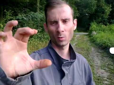 Gyógynövény tisztítása a parazitáktól