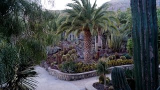 Cactualdea Park -  Cactus Garden In Gran Canaria.