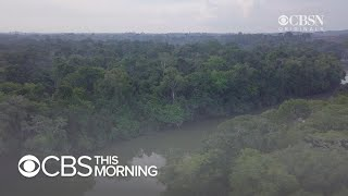 What's behind the destruction of the Amazon rainforest