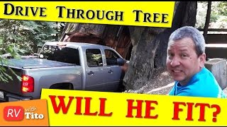 STUCK In a Drive Through Tree? - California Redwoods
