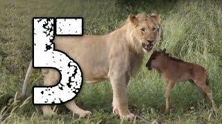 5 zwierząt, które uratowały życie innym zwierzętom