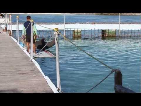 Delfinario en Playa Sirena – Cayo Largo – Cuba