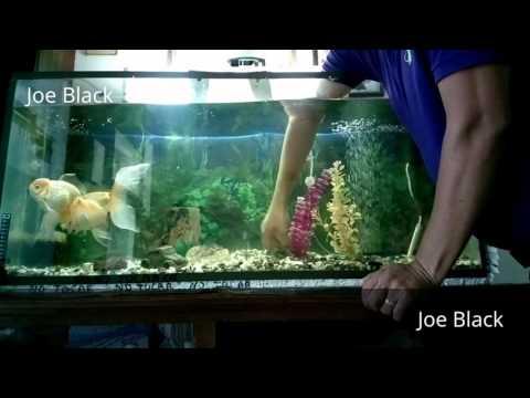 Plantas artificiales en acuario de goldfish 1