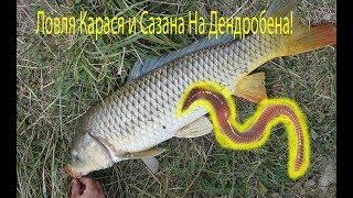 Ловля рыбы на червя летом