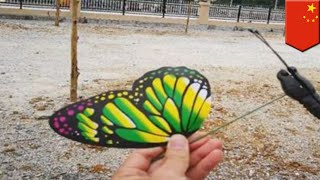 Gambar cover Chinese visitors felt cheated by fake butterfly exhibition - TomoNews