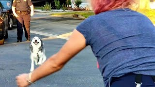 Woman never thought she'd see her husky again, two years later he comes running