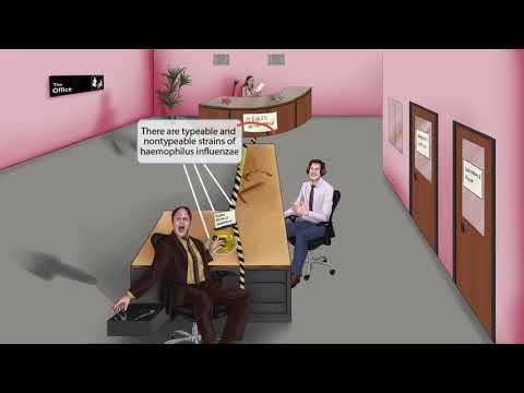 haemophilus a férfiak kenetében