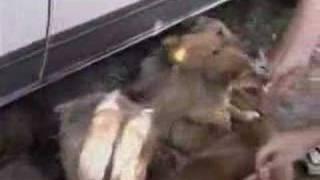 preview picture of video '1992 yo en el campo ( Veronica )'