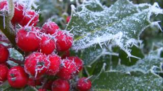 The Holly And The Ivy, Bright The Holly Berries - Christmas With Maureen McGovern -