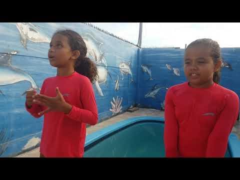 Desafio da piscina - Baixar videos do Youtube grátis