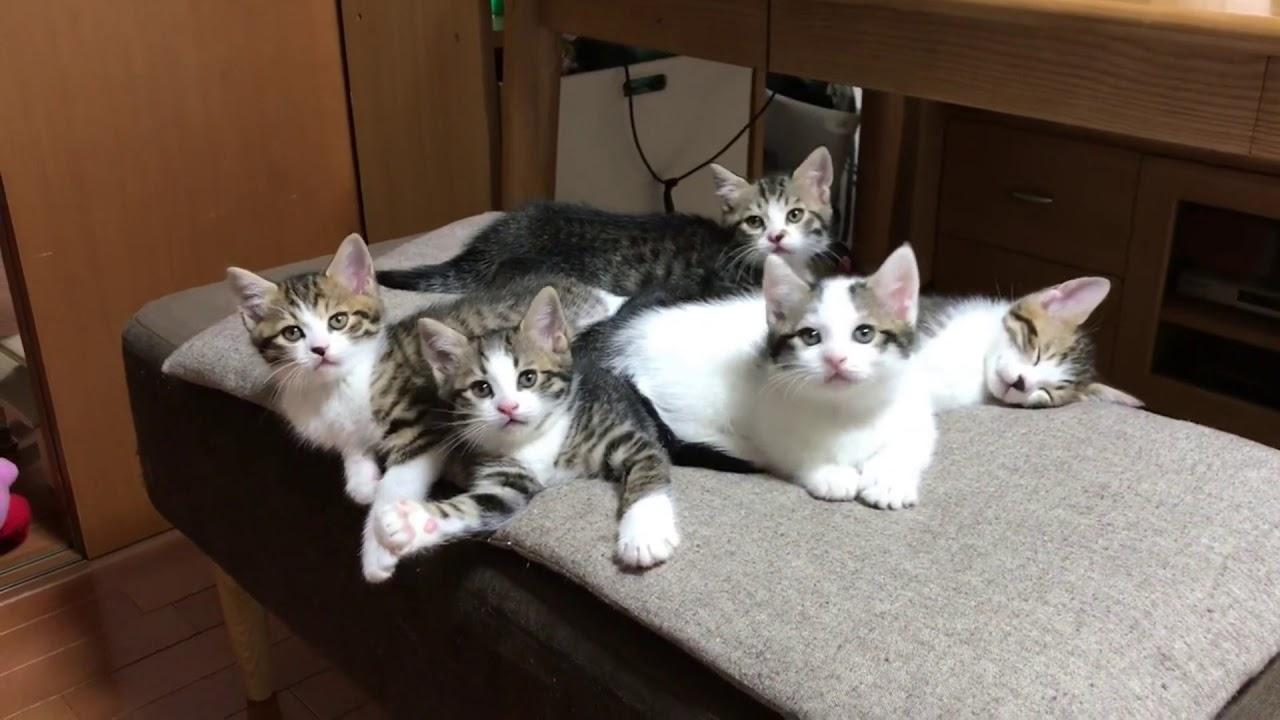 スマホに埋もれていた懐かしい5匹の子猫時代がかわいい