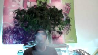 Ganja Creator TV Episode 003:Dreadlock Kush