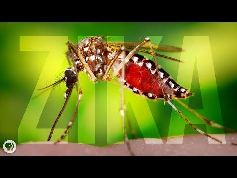 Paraziták akvarelleket kínoznak