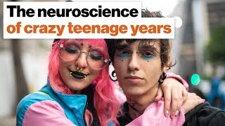 The teenage brain: Why some years are (a lot) crazier than others   Robert Sapolsky
