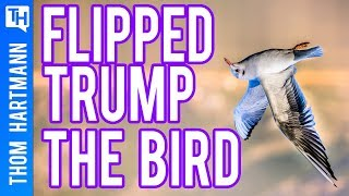 How Flipping Off Trump Got Juli Briskman Elected (w/ Juli Briskman)