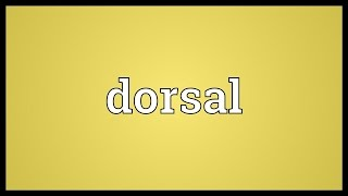 Dorsal Meaning