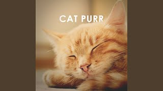 Cat Purr: 1 Hour ASMR Sound for Sleep, Study and Concentration