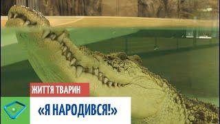 """Зворушлива історія з """"хепі-ендом"""": харківський крокодил Сеня святкує день народження"""