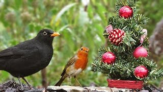 Movies for Cats to Watch at Christmas - Birds at The Christmas Tree
