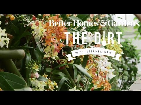 Orchid Show | The Dirt | Better Homes & Gardens