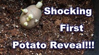 Unexpected Potato Reveal !!! Container No:1, 29.07.2015
