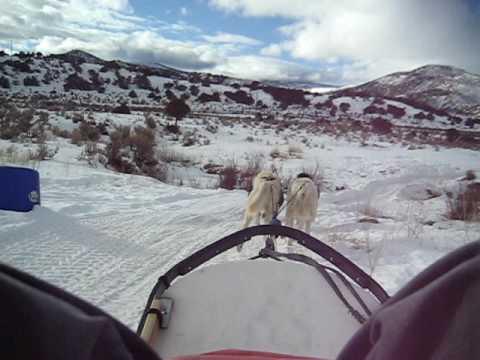 video 0 - Winterhawk Dogsled Adventures gallery