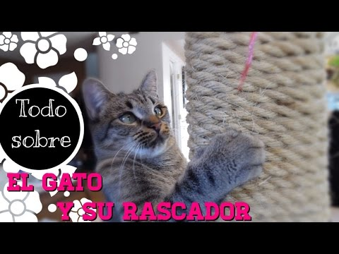 Todo sobre el Rascador del Gato