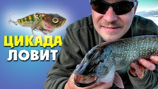 Рыбалка на блесна цикада