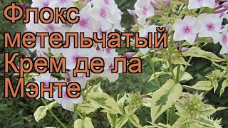 Флокс метельчатый Крем де ла Мэнте 🌿 обзор: как сажать, рассада флокса Крем де ла Мэнте