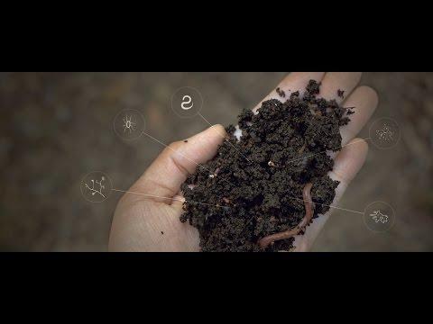 Longuent du microorganisme végétal des ongles sur les pieds que vaut mieux