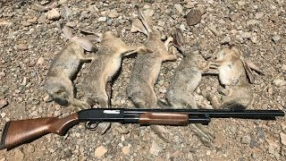 How To Hunt Rabbits: Rabbit Hunting Instructions and Demo - Step by Step