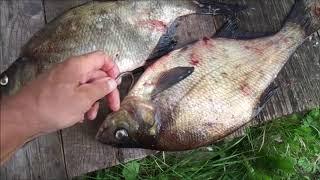 На селигер в сентябре рыбалка