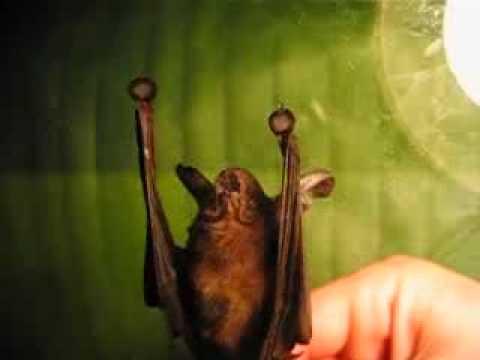 hqdefault ТОП 10 самых необычных животных в мире