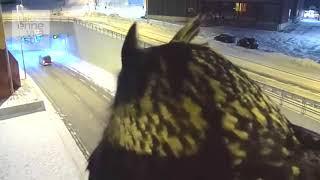 #118 Подборка видео с животными / #118 Best animals video compilation