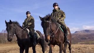 Film do artykułu: Nowe konie będą pomagać w...