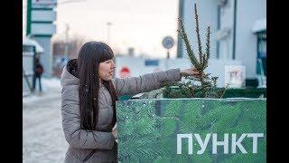В Казани открыт пункт приёма живых ёлок