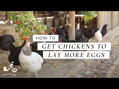 Keeping Your Chickens Fit - Babylonstoren How-To's