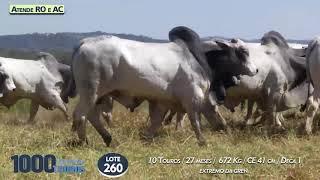 10  touros Nelore PO  (Atende RO e AC)