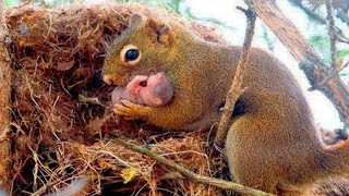 Squirrel begged a man to rescue her five babies who had gotten themselves into quite a predicament