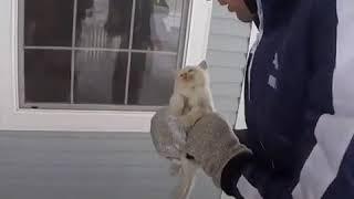 Дикий холод едва не убил этого котенка