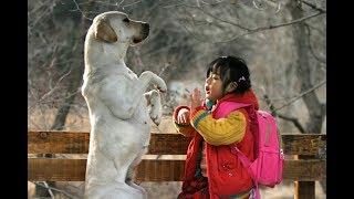 狗狗意外致小主人身亡,它用自己的命弥补过错,看哭万人