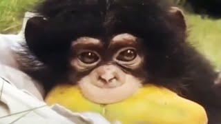 Funny Monkey Videos - A Funny Monkeys Compilation 2020 [Funny Pets]