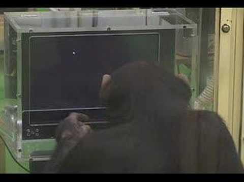 La inteligencia en los primates